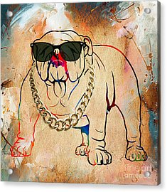 Bulldog Collection Acrylic Print by Marvin Blaine