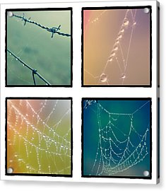 4 Color Web Droplets Acrylic Print