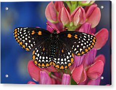 Colorful Baltimore Checkered Spot Acrylic Print