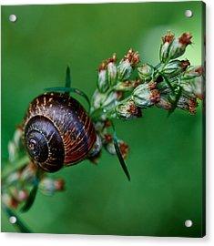 Copse Snail Acrylic Print by Jouko Lehto
