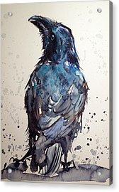 Crow Acrylic Print by Kovacs Anna Brigitta