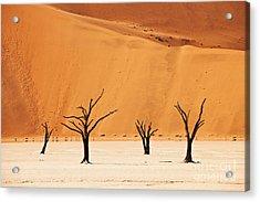 Dead Vlei In Namib Desert Acrylic Print by Juergen Ritterbach