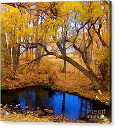 Fall Is Here Acrylic Print by Marilyn Diaz
