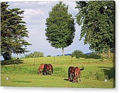 4 For Lunch Acrylic Print