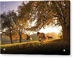 Horses Running At Sunset, Baden Acrylic Print