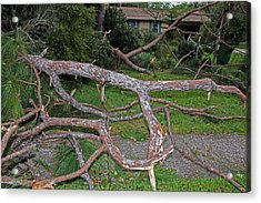 Hurricane Irma Residential Storm Damage Acrylic Print by Millard H. Sharp