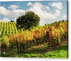 Italy, Tuscany, Chianti, Autumn Acrylic Print by Terry Eggers