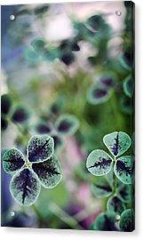 4 Leaf Clover Acrylic Print by Nancy Ingersoll