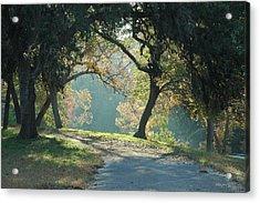 Morning Light Acrylic Print by Robert Anschutz