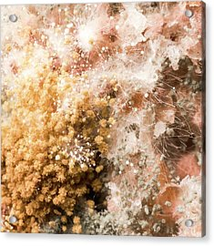 Mould On Bread Acrylic Print by Science Photo Library