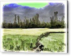 Mustard Fields In Kashmir Acrylic Print