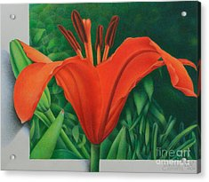 Acrylic Print featuring the painting Orange Lily by Pamela Clements