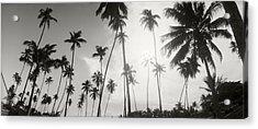 Palm Trees On The Beach, Morro De Sao Acrylic Print