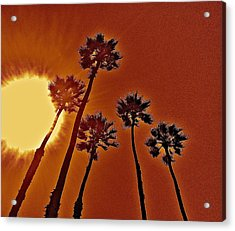 4 Palms N Sun Acrylic Print by Joe  Burns