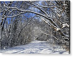Path In Winter Forest Acrylic Print by Elena Elisseeva