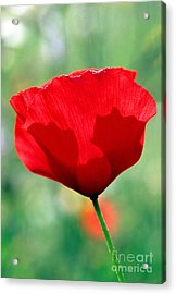 Poppy Flower Acrylic Print by George Atsametakis