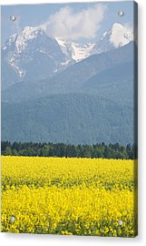 rapeseed field in Brnik with Kamnik Alps in the background Acrylic Print