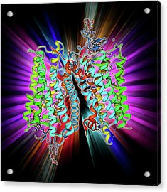 Rhodopsin Molecule Acrylic Print by Laguna Design