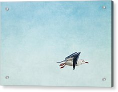 Seagull Acrylic Print by Heike Hultsch