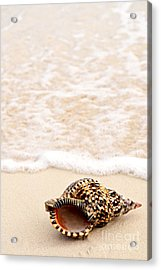 Seashell And Ocean Wave Acrylic Print by Elena Elisseeva