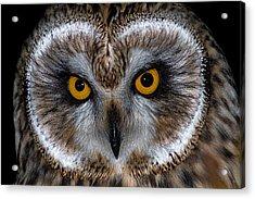 Short Eared Owl Acrylic Print by Ian Hufton