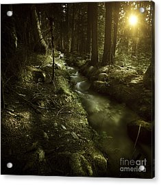 Small Stream In A Forest At Sunset Acrylic Print by Evgeny Kuklev