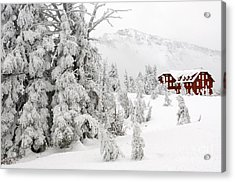 Snow And Ice On Trees Acrylic Print by John Shaw