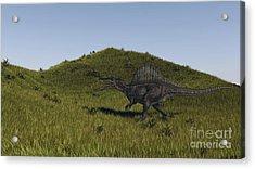 Spinosaurus Walking Across A Grassy Acrylic Print by Kostyantyn Ivanyshen