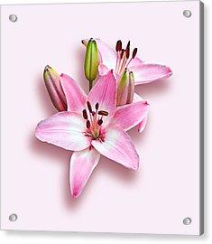 Spray Of Pink Lilies Acrylic Print by Jane McIlroy