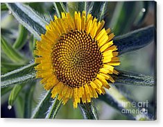 Acrylic Print featuring the photograph Spring Wild Flower by George Atsametakis