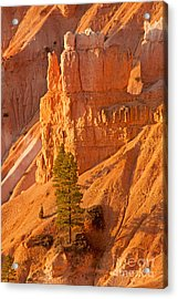 Sunrise At Sunset Point Bryce Canyon National Park Acrylic Print