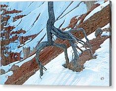 Sunrise Point Bryce Canyon National Park Acrylic Print