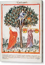 Tacuinum Sanitatis, Medieval Health Acrylic Print