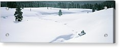 Trees On A Snow Covered Landscape Acrylic Print