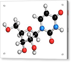 Uridine Nucleoside Molecule Acrylic Print by Molekuul