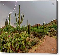 Usa, Arizona, Tucson, Saguaro National Acrylic Print by Peter Hawkins