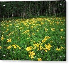 Usa, Colorado, Gunnison National Acrylic Print by Adam Jones