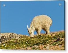 Usa, Colorado, Mount Evans Acrylic Print