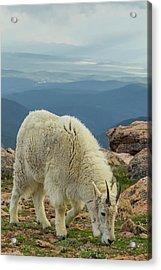 Usa, Colorado, Mt Acrylic Print