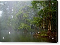 Usa, Louisiana, Lake Martin Acrylic Print