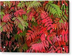 Usa, Washington State, Walla Walla Acrylic Print by Brent Bergherm