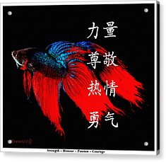 4 Virtues Siamese Fighting Fish #1 Acrylic Print
