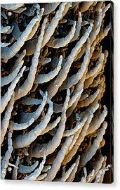 Water Lettuce Trichomes Acrylic Print by Stefan Diller