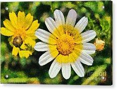 Wild Daisies Acrylic Print by George Atsametakis