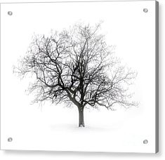 Winter Tree In Fog Acrylic Print by Elena Elisseeva