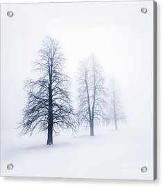 Winter Trees In Fog Acrylic Print by Elena Elisseeva