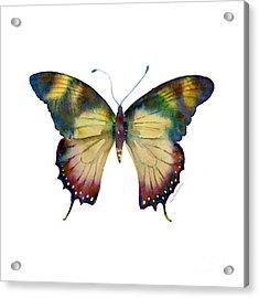 41 Yellow Kite Butterfly Acrylic Print by Amy Kirkpatrick