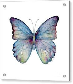 43 Blue Celestina Acrylic Print by Amy Kirkpatrick