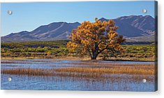 Usa, New Mexico, Bosque Del Apache Acrylic Print by Jaynes Gallery