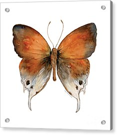 47 Mantoides Gama Butterfly Acrylic Print by Amy Kirkpatrick